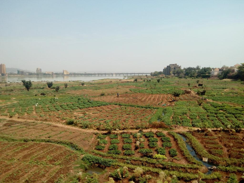 Bestellte Felder mit grünen Pflanzen auf brauner Erde, im Hintergrund fließt ein Fluss, blasser Himmel am Horizont.