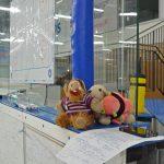 Drei Plüschtiere liegen vor einem Plan des Eishockeyfeldes.